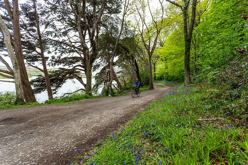 Man cycling along a gravel path through trees with bluebells in the foreground