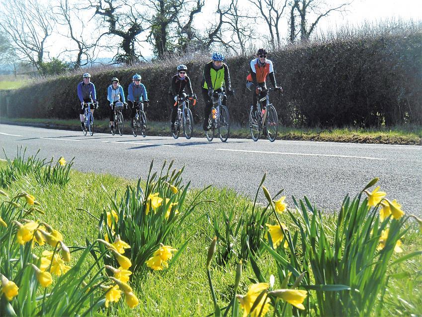 Riding past spring daffodils. Photo by John Ferguson.