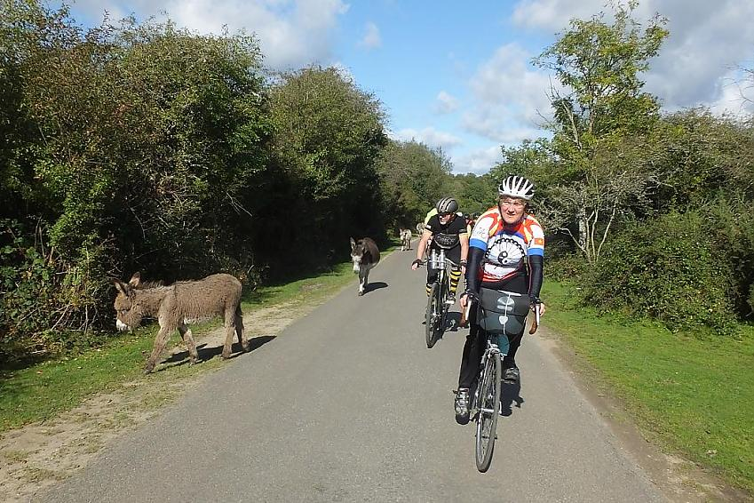A rider taking part in the Gridiron 100km encounters one of the New Forests inhabitants!