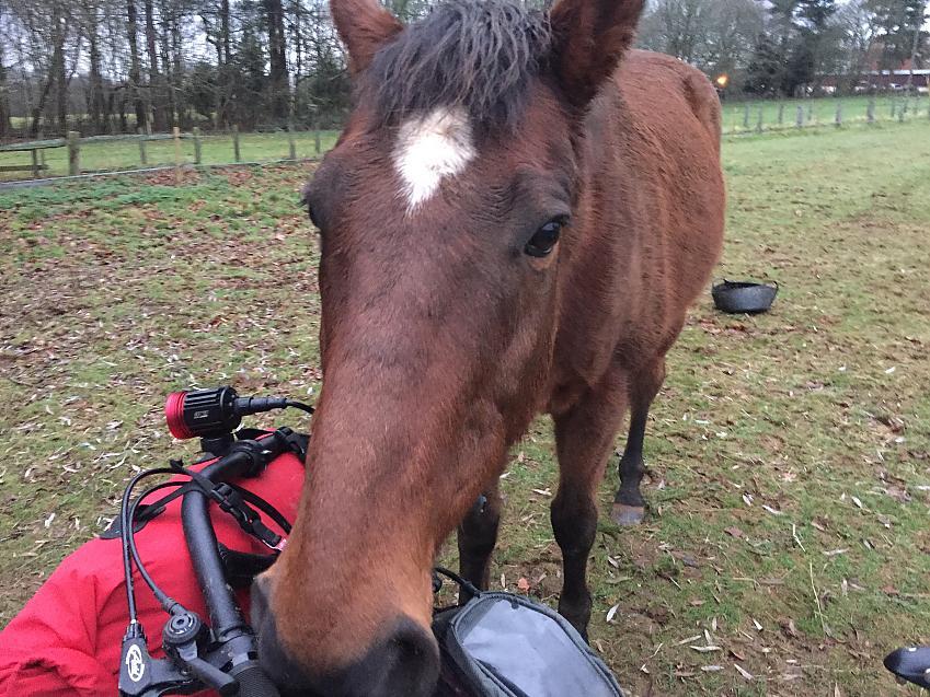 A horse investigating a cyclist's handlebar bag